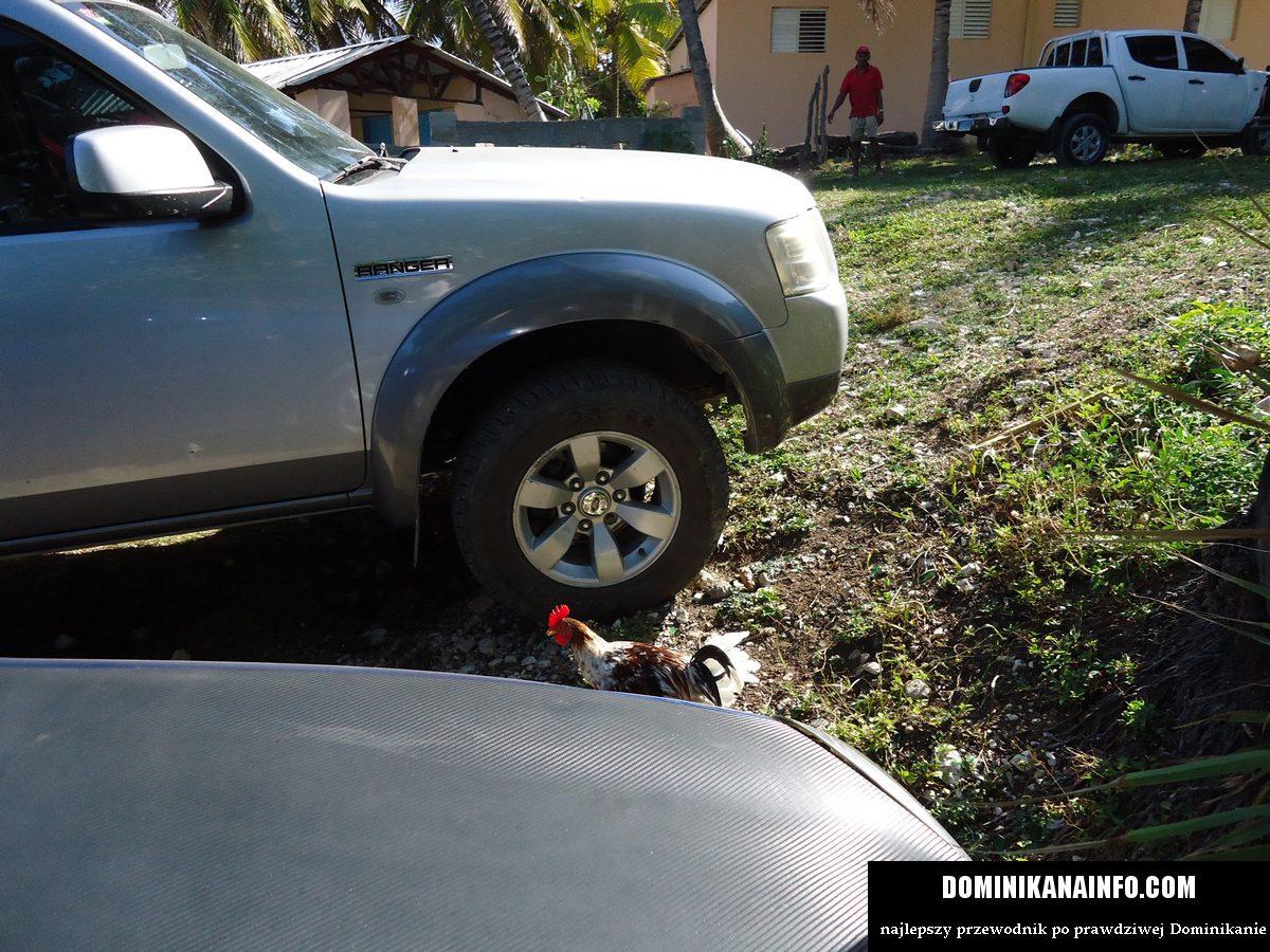 Dominikana kogut i SUV