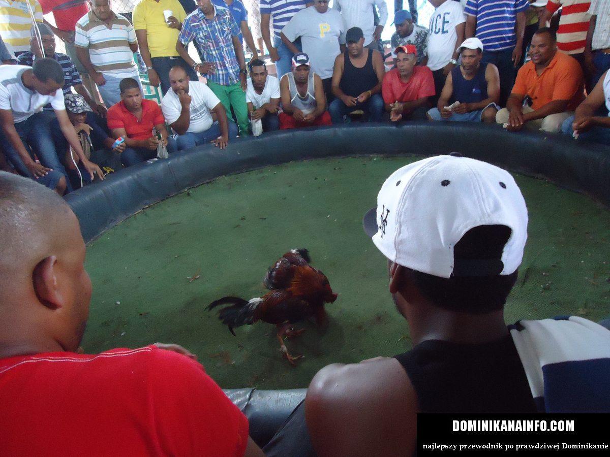 Dominikana walki kogutów