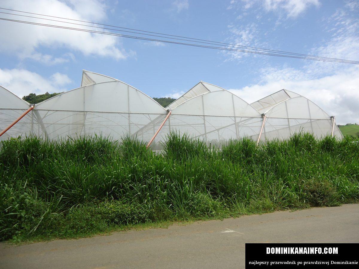Dominikana rolnictwo