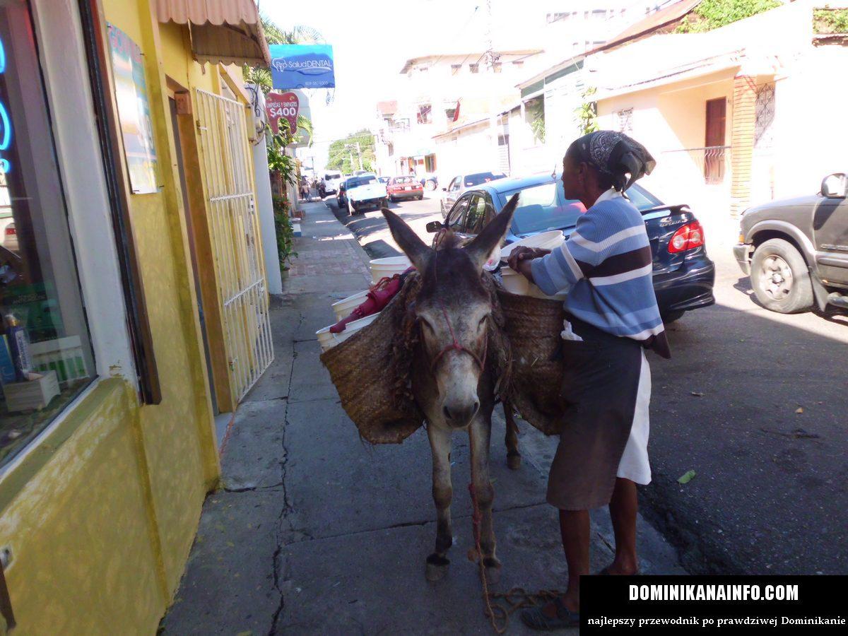 Dominikana osiołek na ulicy